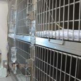 犬用入院舎(計14室)