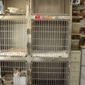 猫用入院舎(計9 室)